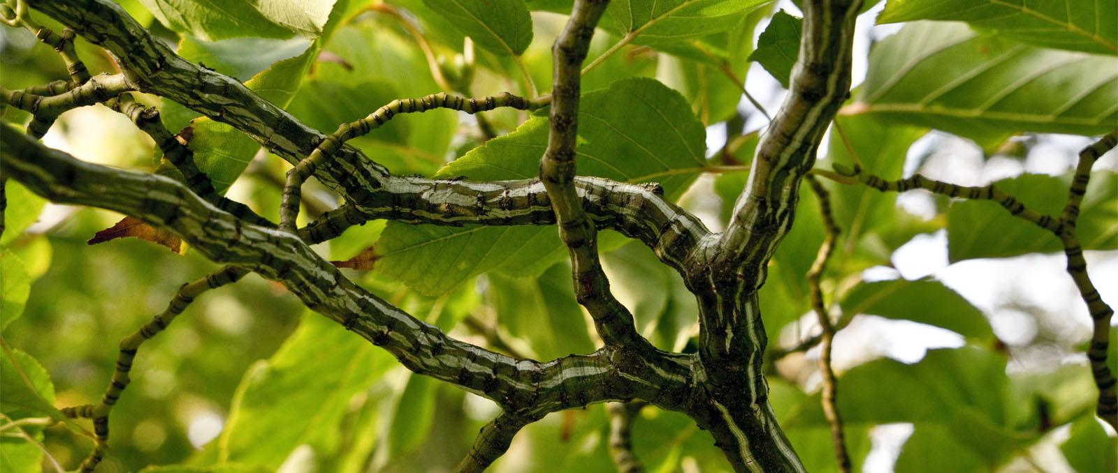 banner-bonsai-01_1600x678px